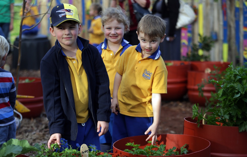Vegie garden paying off for Marmion Primary School