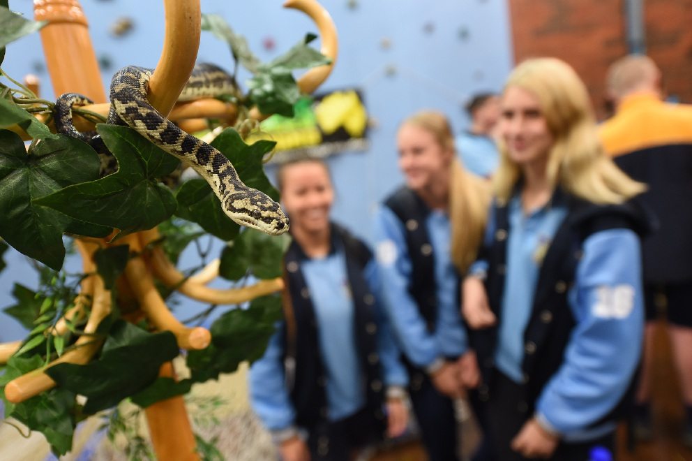 Jamie Woo, Alix Kelly and Courtney Murphywith Hissy, a south west carpet python. Picture: Jon Hewson www.communitypix.com.au   d457681
