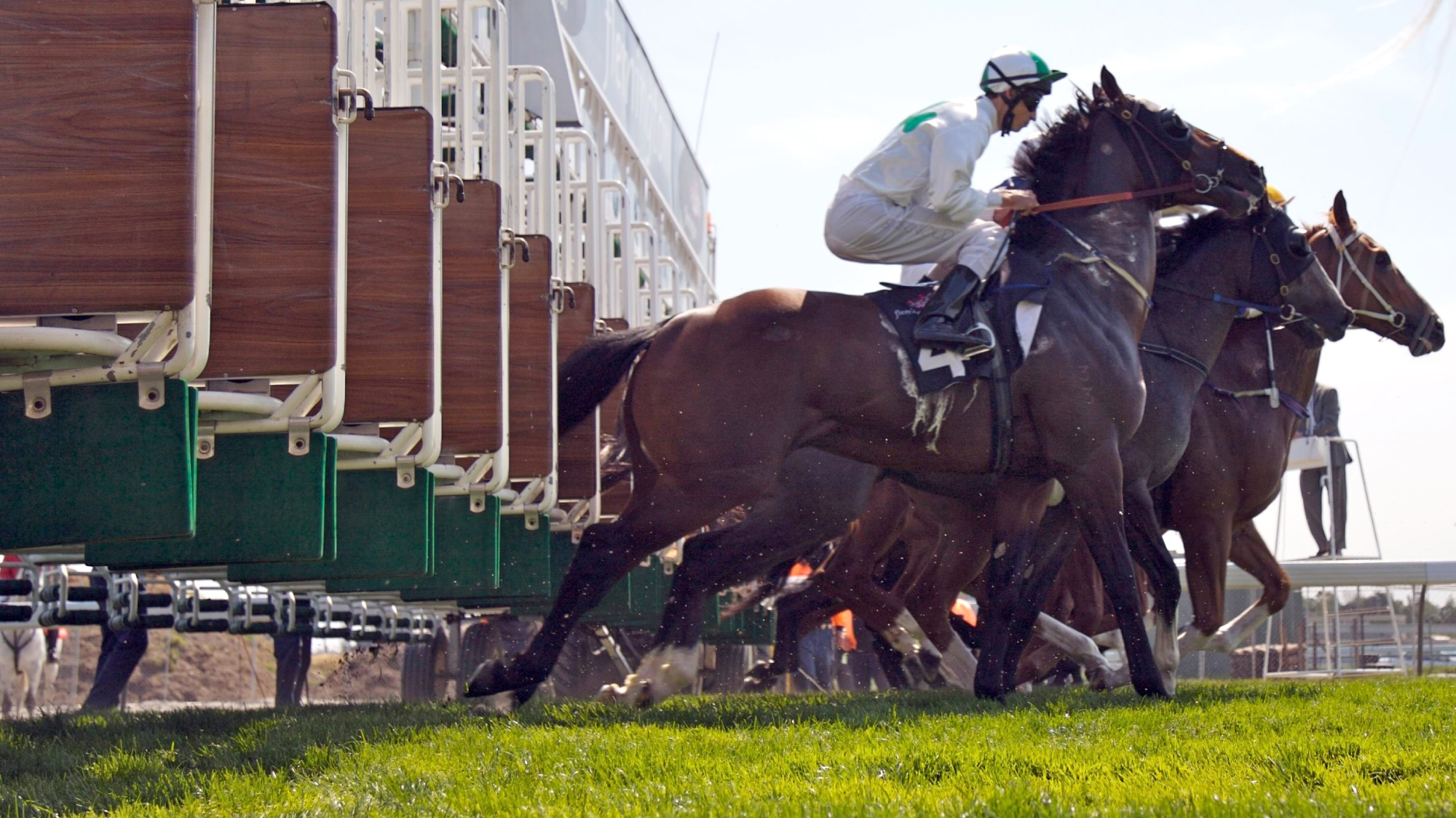 Is horse racing the next to be banned?