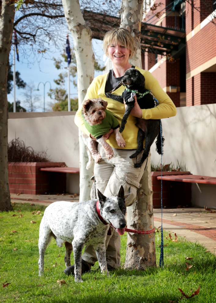 Jeane Howes (President of Best Friends Animal Rescue), holding L-R: Ralph and Pepsi with Dozer on the ground. Jeane is looking for tin-shakers to help raise funds to build a Hills retirement home for old dogs. Picture: David Baylis d457414