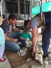 Kelmscott Farm school tutor Steve Toghill demonstrates shearing to Aiden Kellock, observed by his sister Matilda and father Bill.