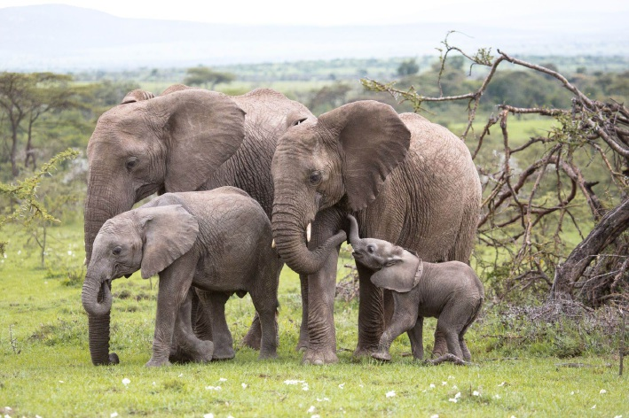 Elephants of Mozambique's Gorongosa National Park.