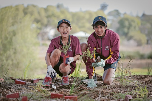 Lake Claremont to get 37,000 native seedlings planted