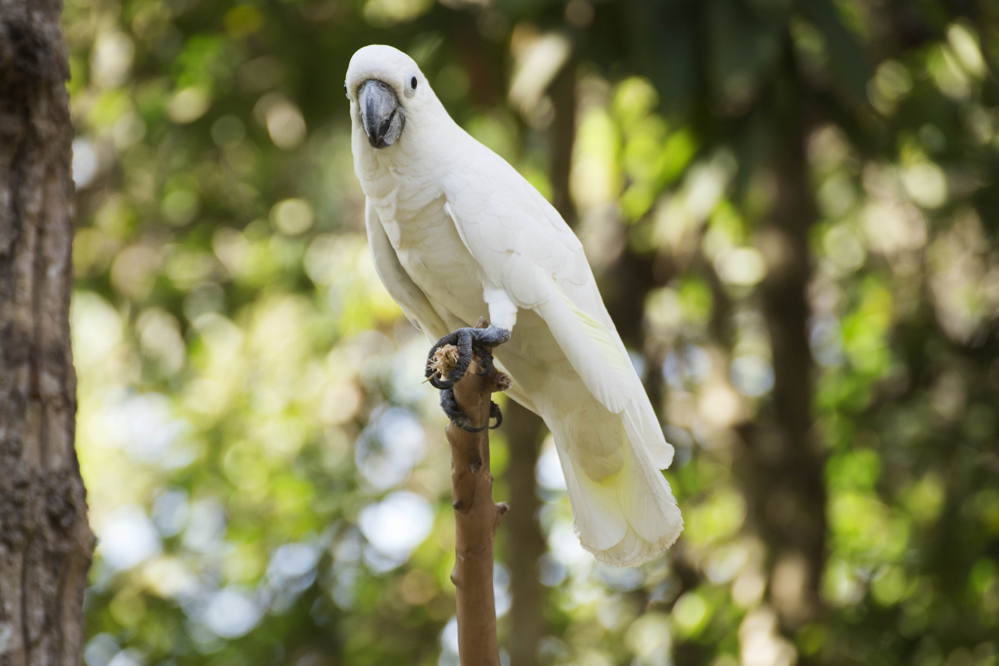 Stirling councillors put end to planned corella cull