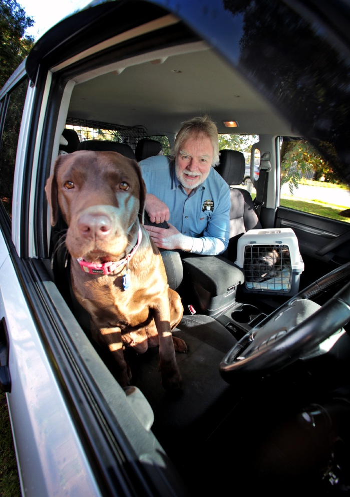 Perth Pet Taxi: an Uber service to transport your pet door to door