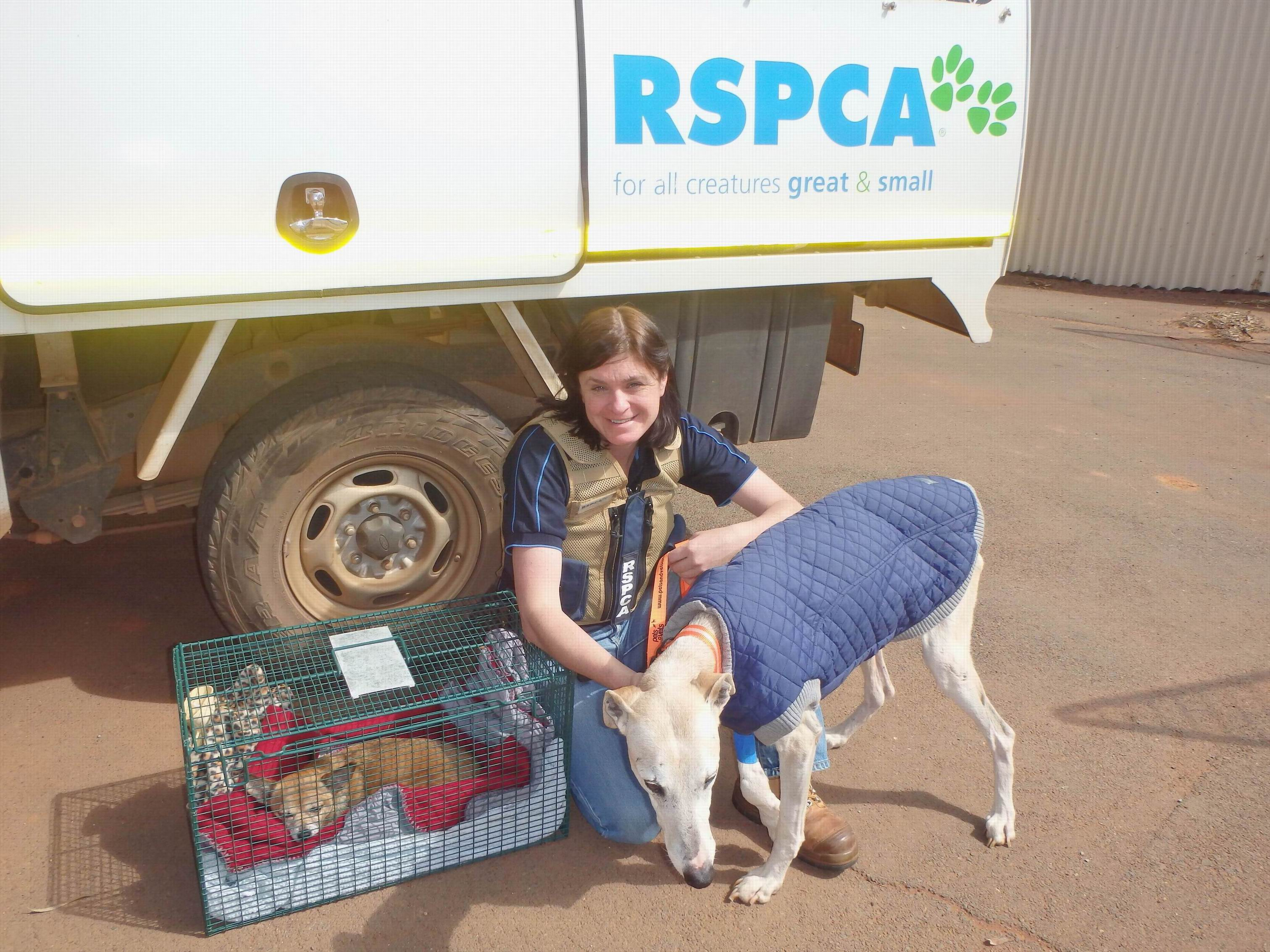RSPCA WA teams up with Aeropets to fly animals to new homes