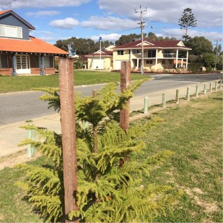 Madora Bay: reward offered to catch tree vandals