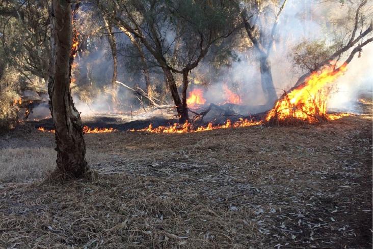 Bindaring Park fire sparks concerns