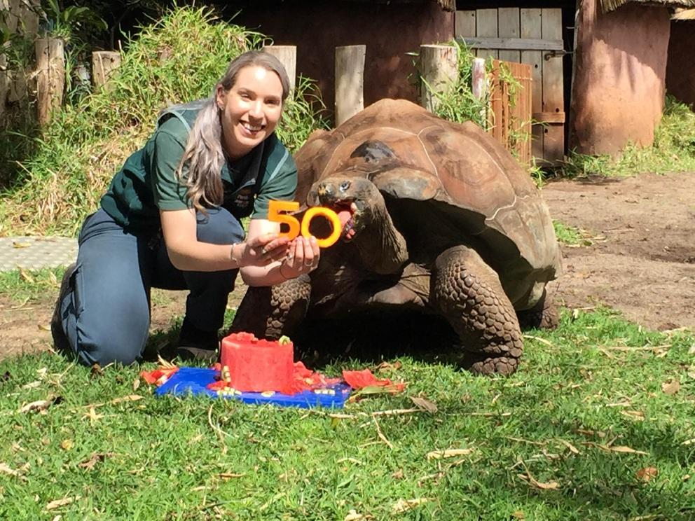 Zookeeper Emily Trainer helps Cerro celebrate his 50th birthday.