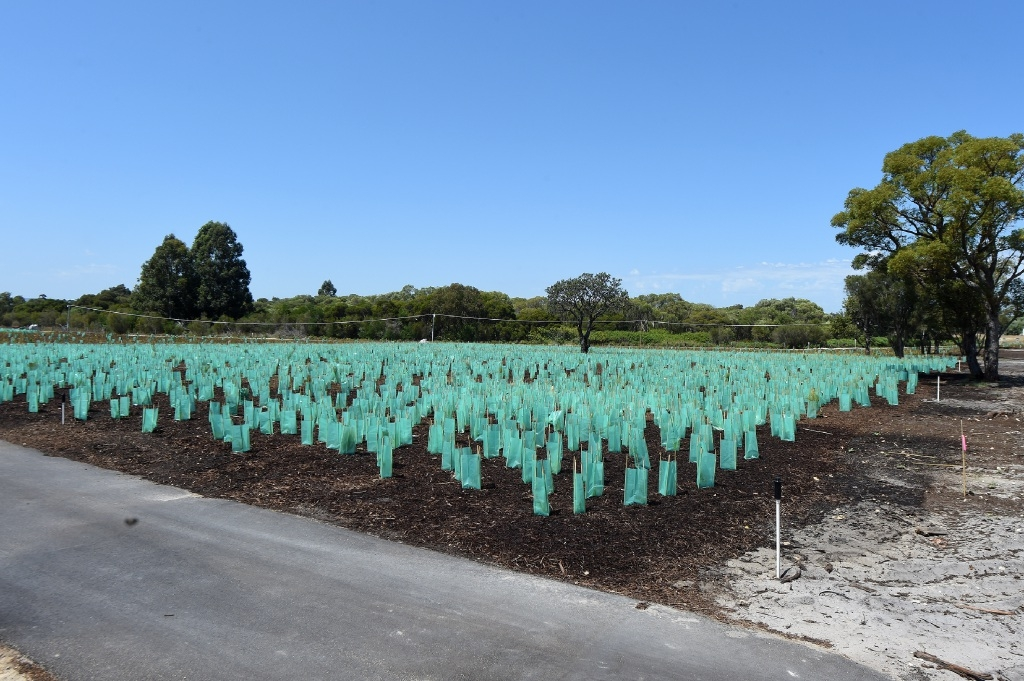 New trees will be planted in Mandurah on National Tree Day.
