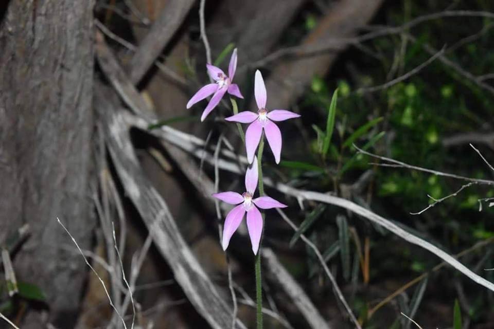 Peel region a blaze of colour as wildflowers bloom