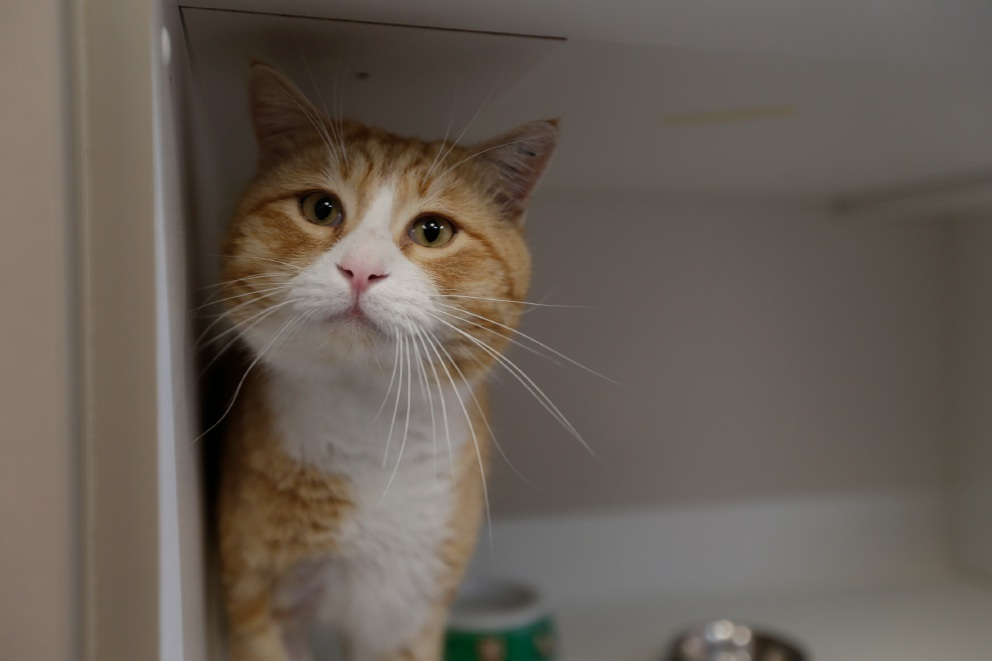 Hey Arnold is looking for his forever home. Picture: Andrew Ritchie.
