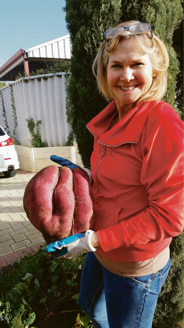 Christine Randall and her 'incredible' sweet potato.