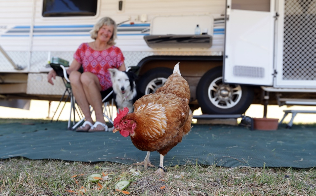Judy Hay and her dog Missy look on as their newest travel companion Chook Chook has a peck in the grass.  Picture: Martin Kennealey www.communitypix.com.au   d446355