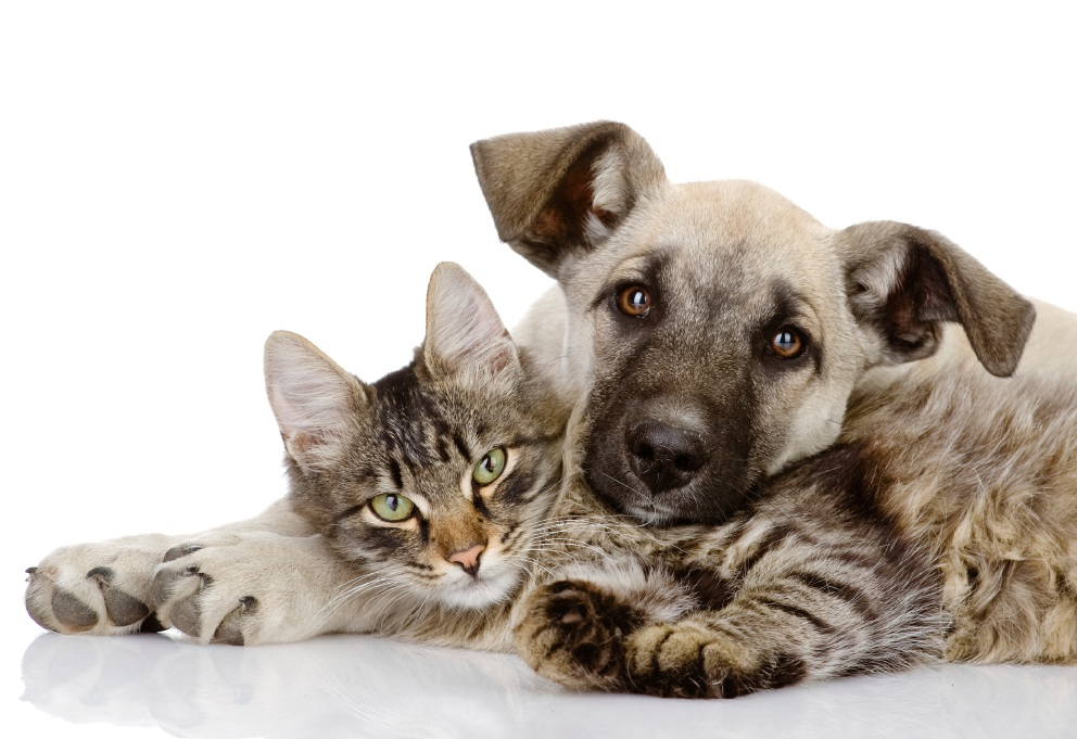 City of Wanneroo CEO to determine cat and dog legislation powers