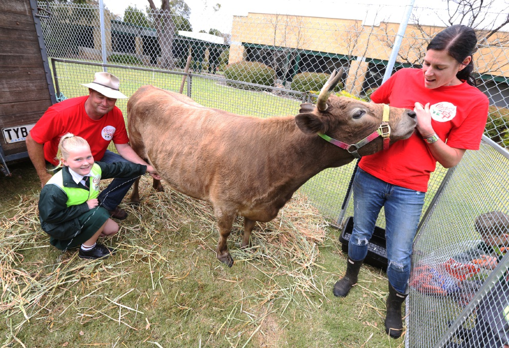 Main picture: Farmer Damian with students. Inset: Yoghurt taste test with manager Angela Ward.