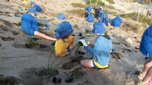 Marmion Primary School students planting in the local dunes.