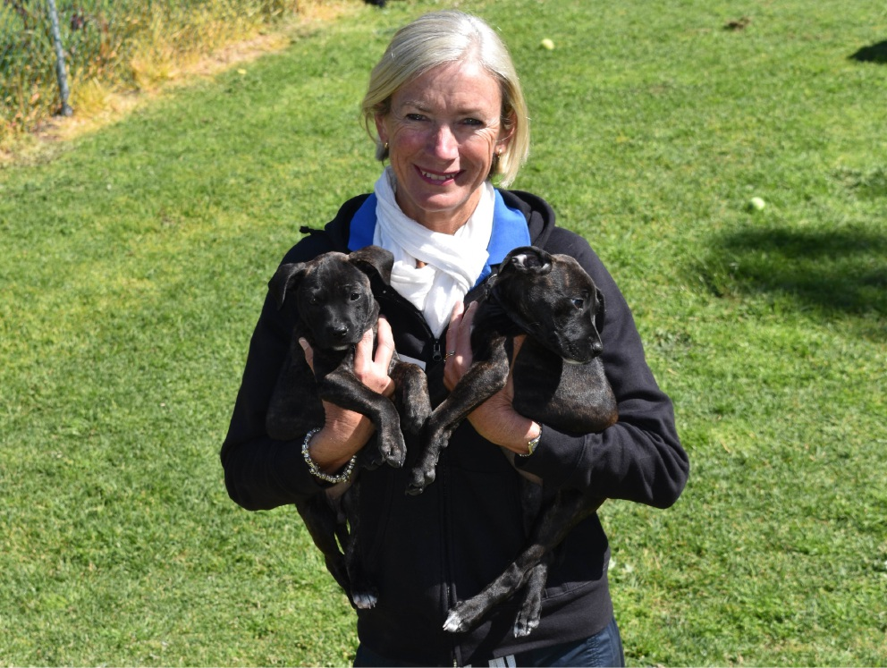 Dogs' Refuge Home general manager Judy Flanagan wants pet owners to sterilise their animals after more than 50 puppies came to the shelter.
