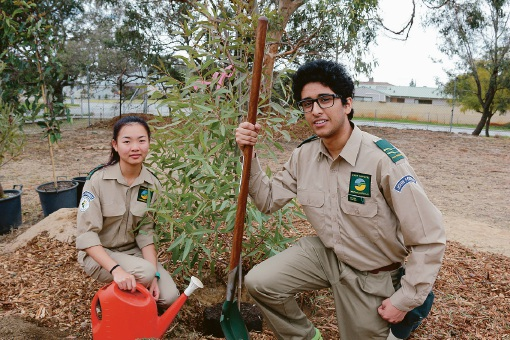 John Forrest students help beautify 'sand pit' with seedlings