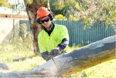 Associated Tree Services can undertake all your tree service needs.