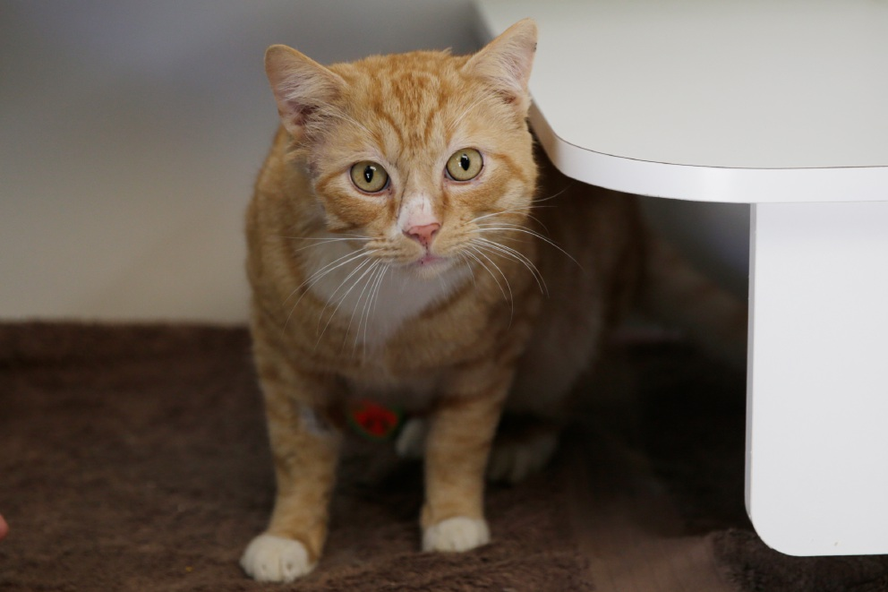 Cat of the Week: Comet is looking for his forever home