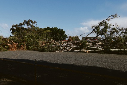 The felled trees at Lathlain Park as West Coast Eagles begins its redevelopment of the ground. Picture: Matt Jelonek