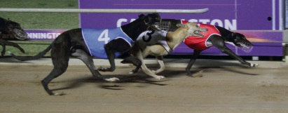 Cannington Greyhounds: All Stars Sprint final shaping as hot contest