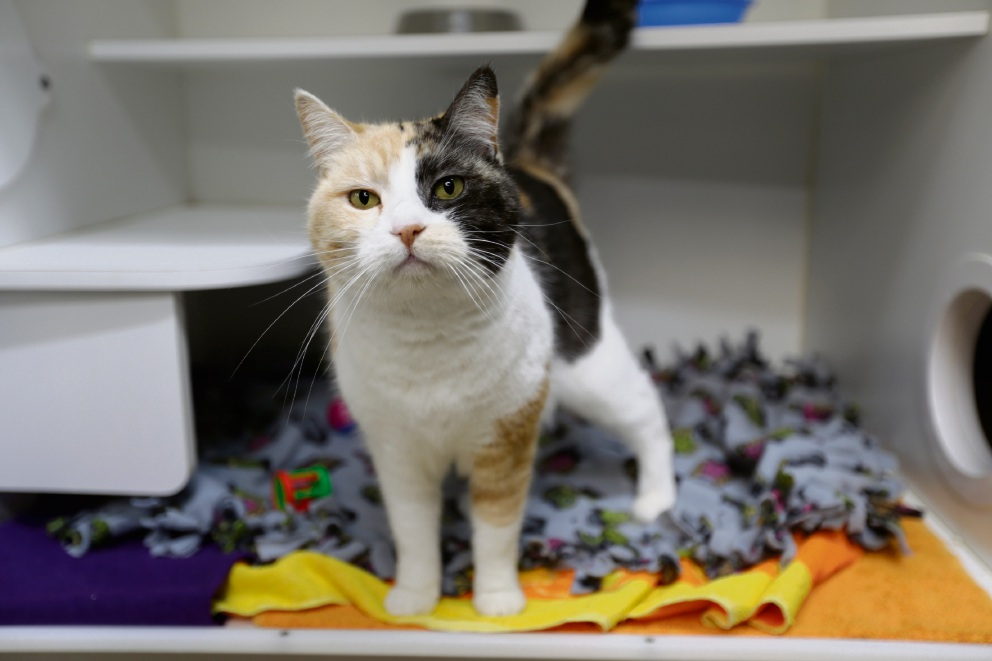 Cat of the Week: Margs the playful seven-year-old