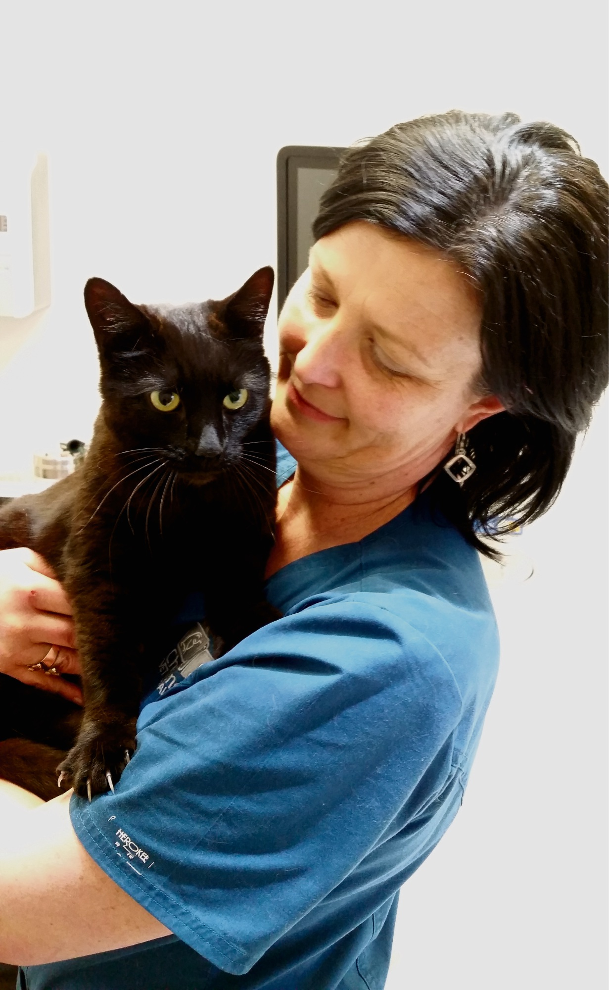 Impound Feline Rescue Rockingham giving homeless cats a better life