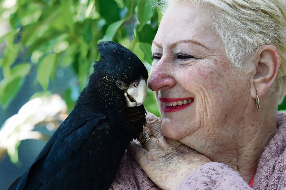 Mandurah Wildlife Rescue Group founder Dot Terry-Bos with one of the parrots that have recovered from the South West fires.