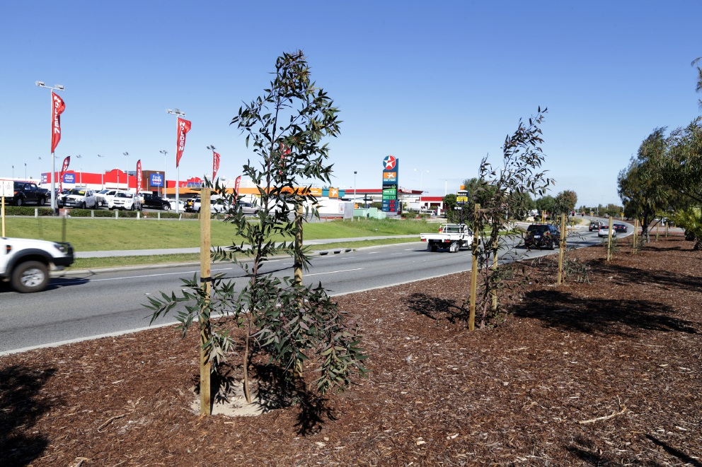 City of Wanneroo gets 200 new trees along Marmion Avenue