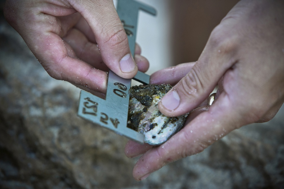 Moore River: pair fined for illegal abalone take ahead of start of season