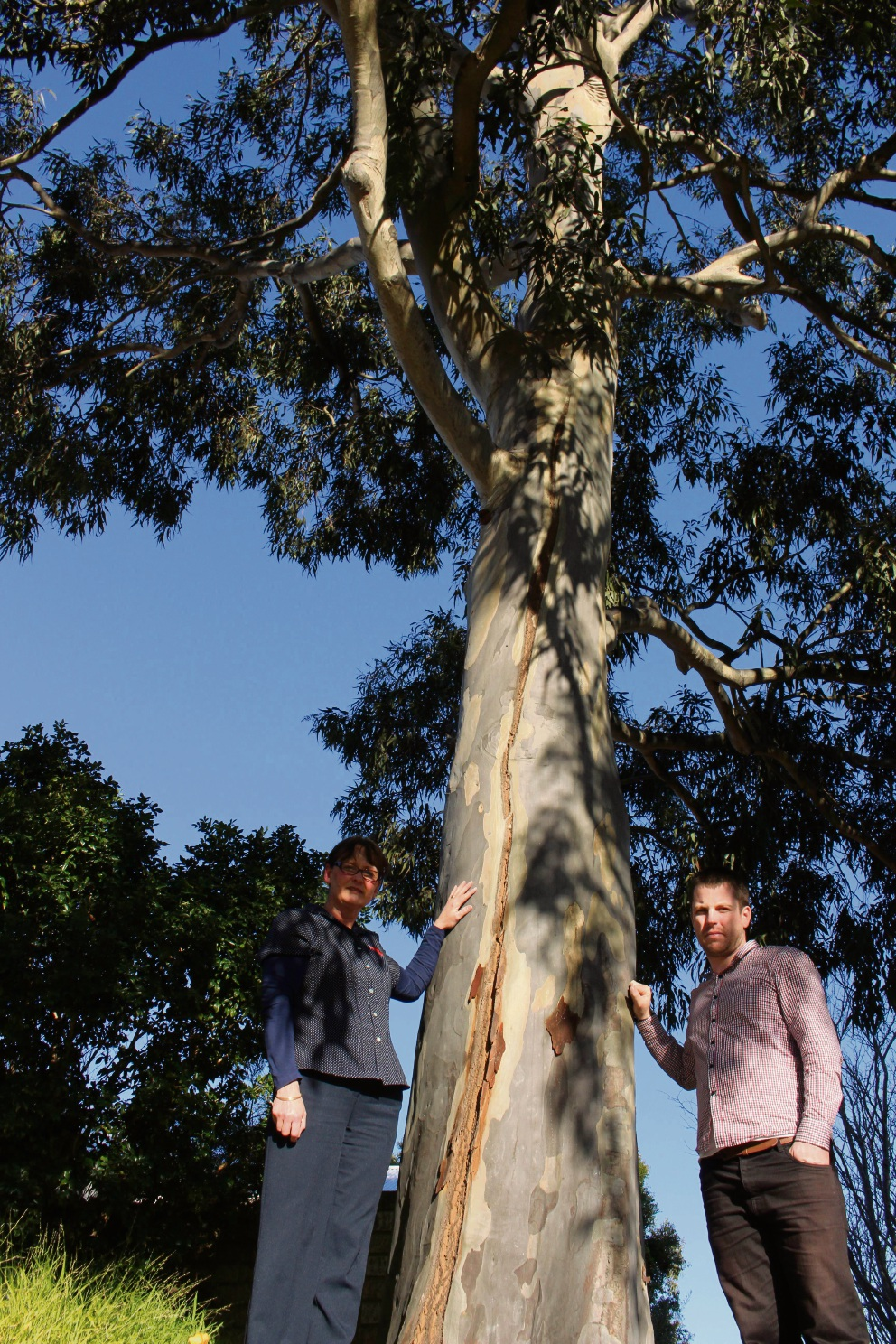 Sue Winter and Jesse Jacobs with one of the spotted gums.