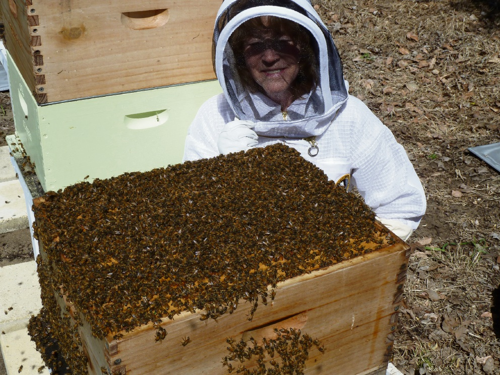 Wanneroo: beekeeper buzzed by proposed new law