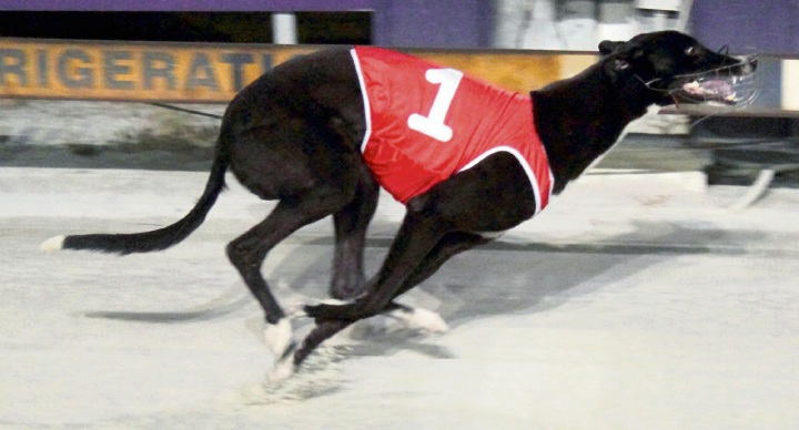 Mandurah Greyhounds: good prospects for White