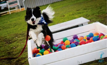 130 dogs tackle Canine Adventure Course in Morley