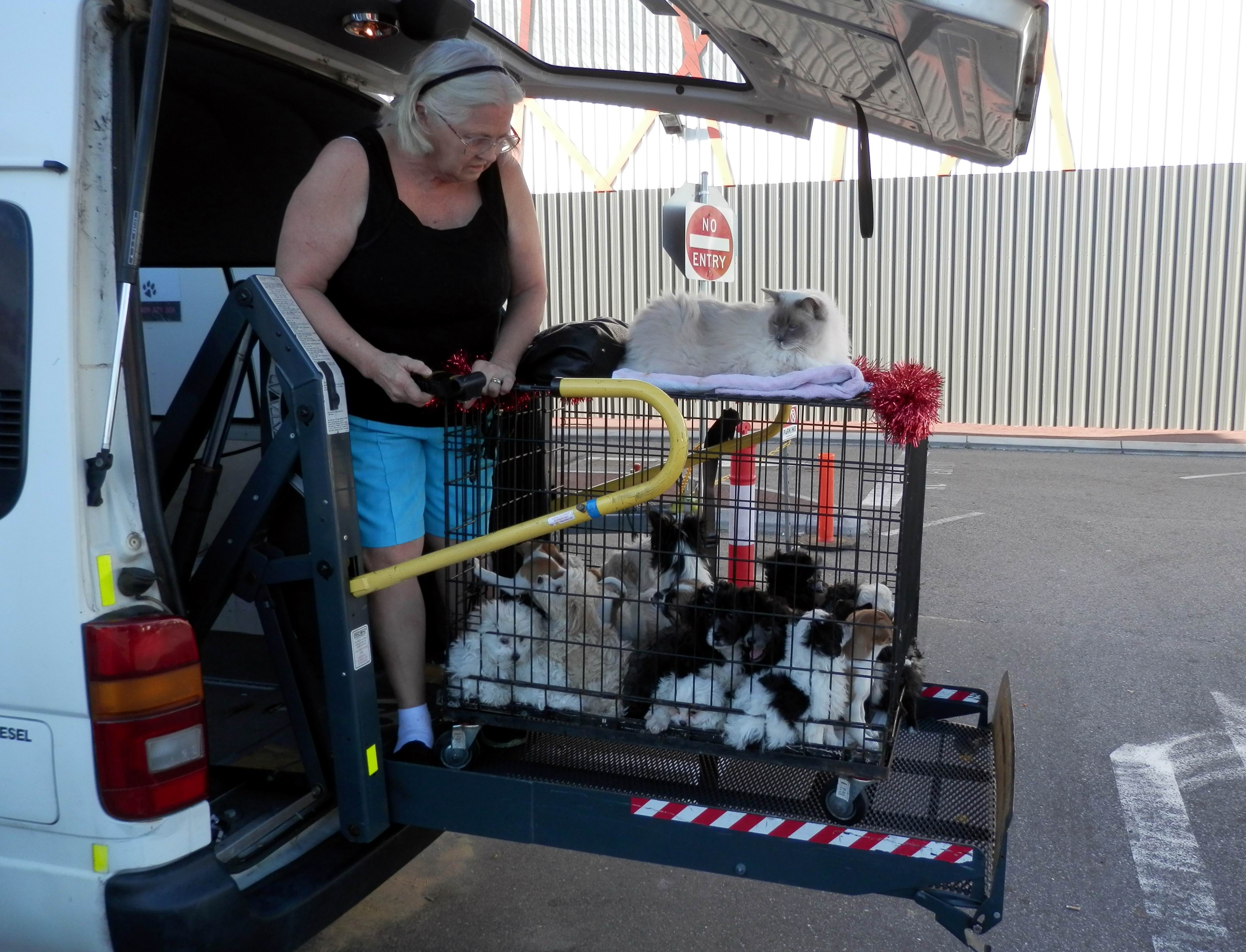 4 Paws and Claws owner Helena Street and cat Sir Harry help load the puppies into the car. Picture: Larry Ellis