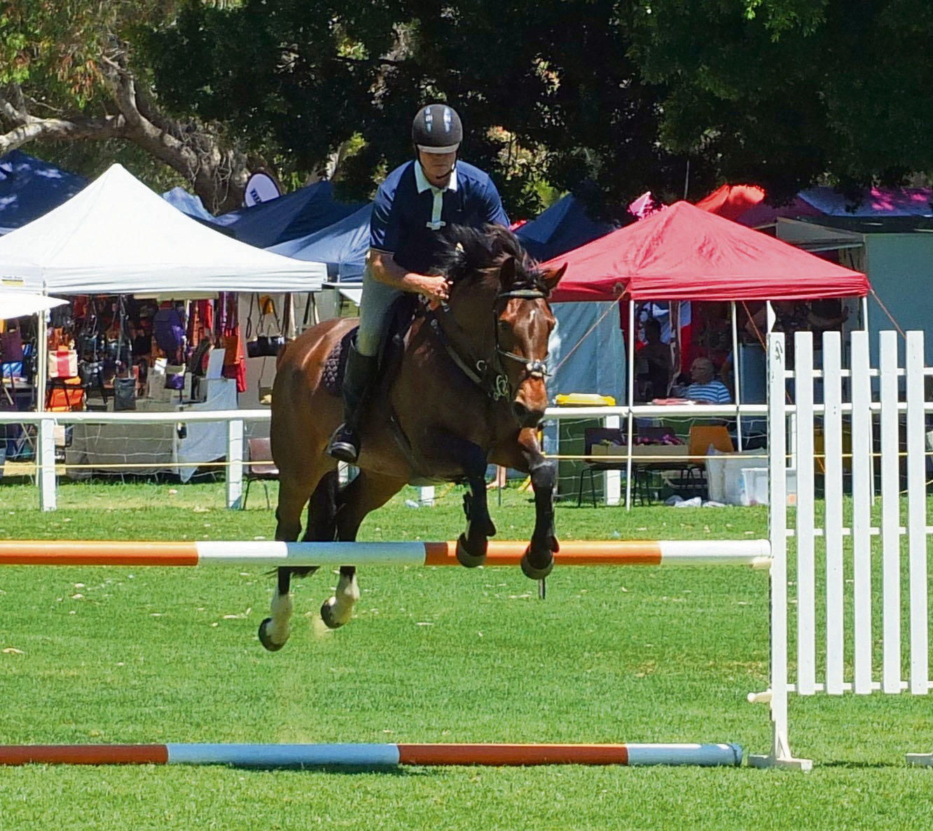 A show jumper easily clears a hurdle.