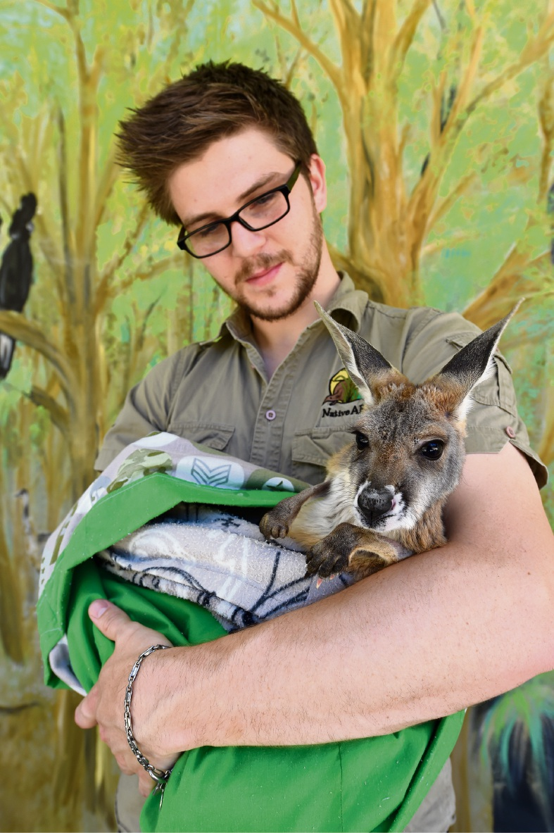 Dean Huxley with Beans, the red kangaroo. Picture: Jon Hewson        www.communitypix.com.au   d461958