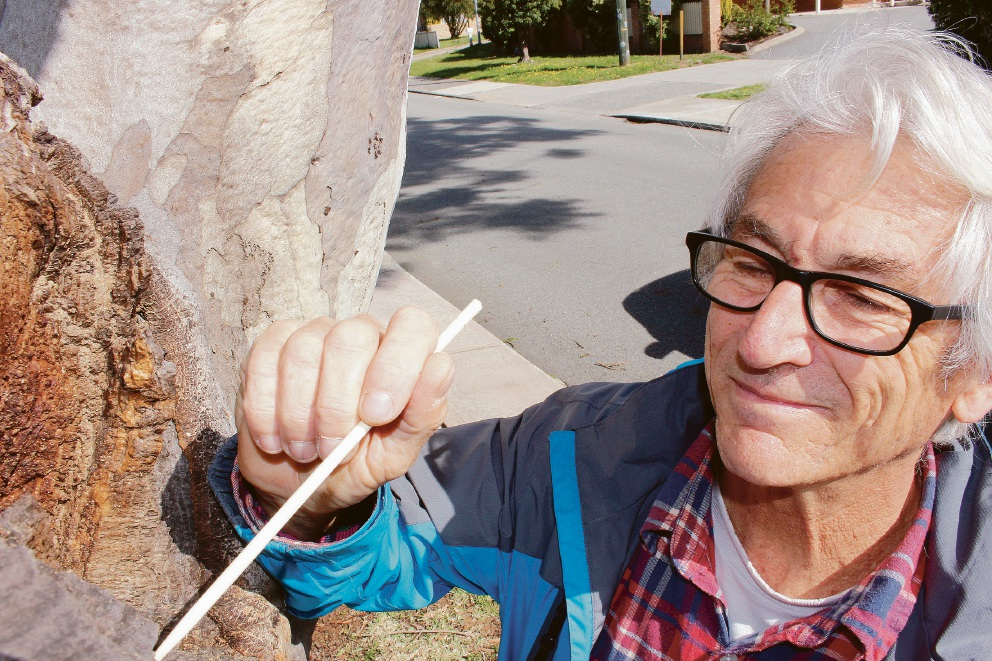 David Piggott inspects a tree with termites in.