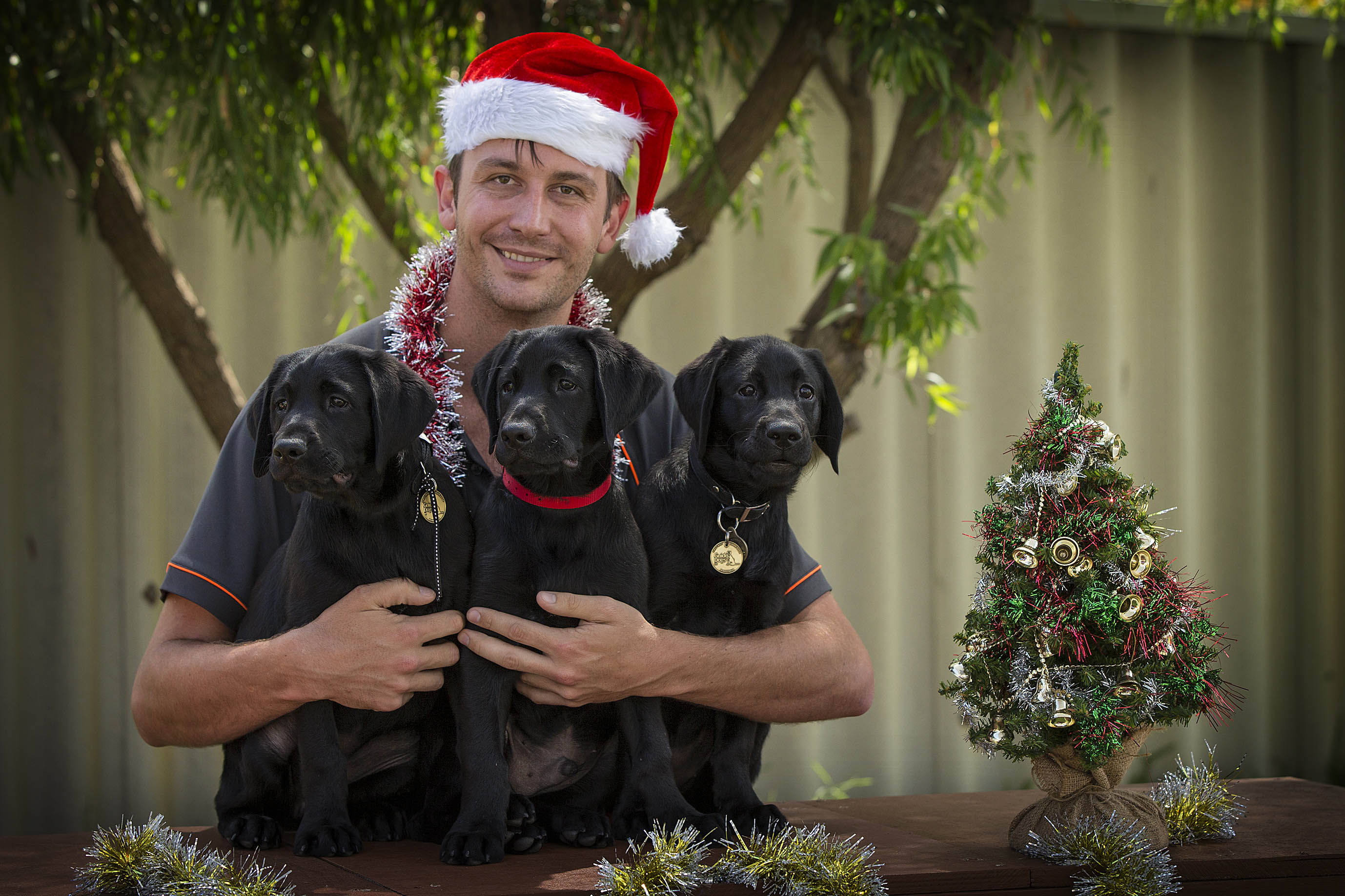 Pictured is Josh Crawford (puppy raising co-ordinator) with Dolly, Bazza and Ella. Picture: Jon Hewson.