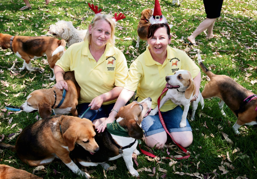 Cassandra Rhodes, of Forrestfield, (president and rescue manager at Everything Beagle Rescue WA) with Max (under her right arm) and Belinda Van Sebille, of Aubin Grove, with Parker (under her left arm) at the Aveley Dog Exercise Park. Picture: David Baylis d462615