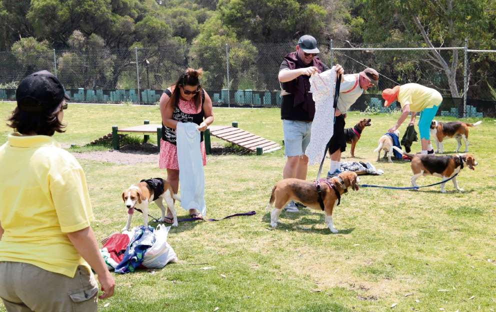 Games in full swing at the Everything Beagle Rescue WA Christmas party at Aveley Dog Exercise Park. Picture: David Baylis d462615