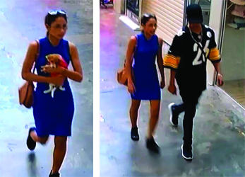 Police want to speak with these two people regarding a stolen Jack Russell from a pet store in Morley.