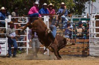 Boddington to celebrate 40th Rodeo this weekend