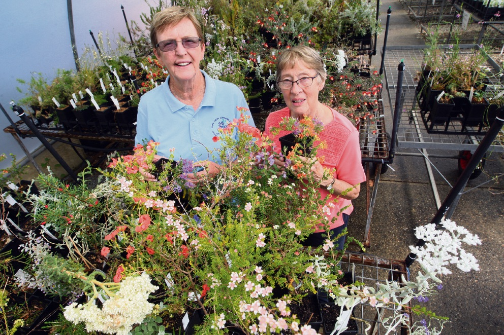 Wildflower Society holding plant sale in Darch this weekend