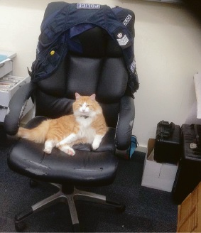 Constable Kitty relaxing in the boss' chair. Picture: Mundijong Police/Twitter
