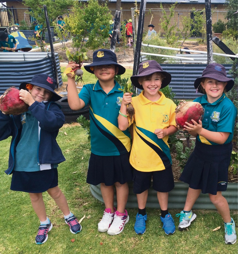 Two Rocks Primary students harvest giant beet