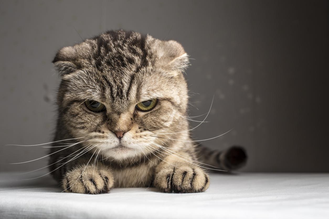 Cat deterrent to be created for Noranda's Lightning Swamp area