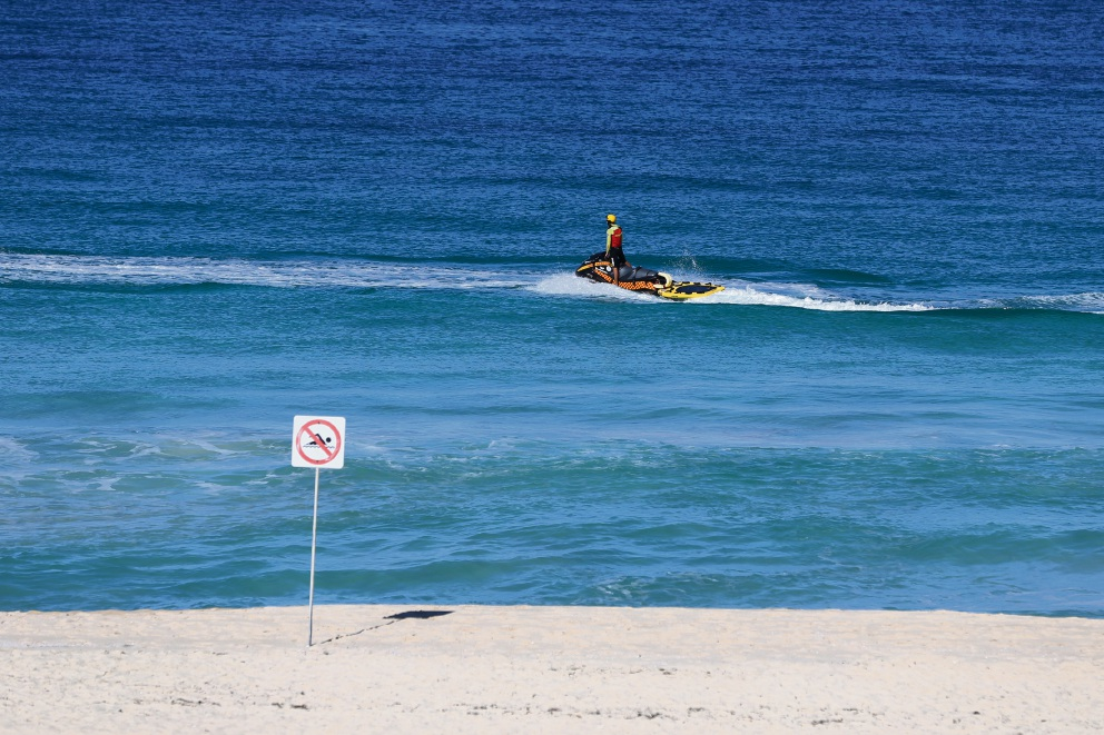 Scarborough shark sightings on the up, but swimmers unaffected